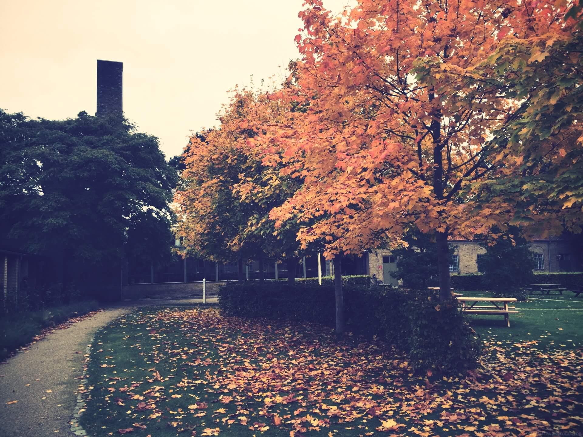 Seasons in Denmark at International People's College a Folk High School 13