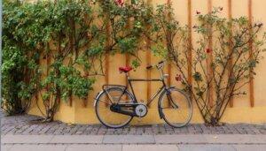 International People's College Alumni Polen bike